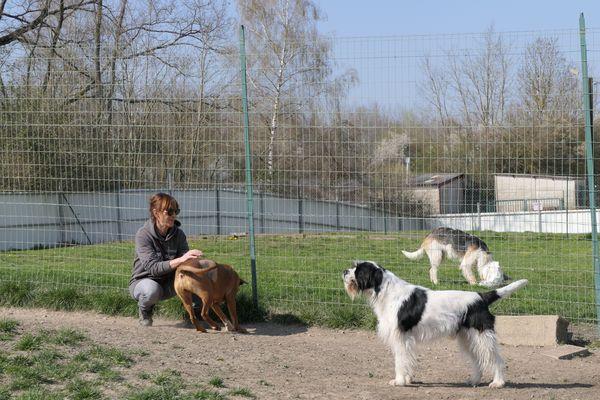 A la SPA de Montceau-les-Mines, différents parcs ont été aménagés pour les chiens, en fonction de leur caractère.