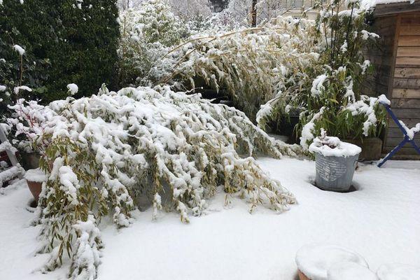 A Clermont-Ferrand, ce bambou a été surpris par les chutes de neige.