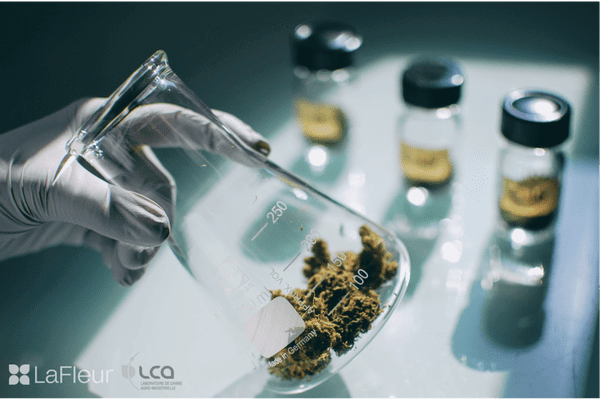 """Le procédé est innovant et fait appel à la """"chimie verte"""". Il vise la création d'extraits de cannabis à usage médical plus actifs sur les pathologies des patients."""