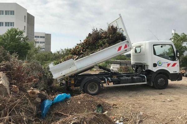 Ramassage des déchets verts à Saint-Jean-de-Védas (Hérault) pendant le confinement