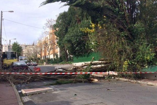 Un arbre du consulat du Maroc à Montpellier est tombé dans le quartier de la cité Gely après l'épisode venteux de cette nuit - 4 mars 2017
