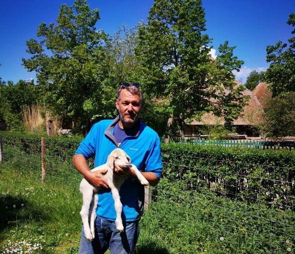 En ce printemps les nuits et journées sont ponctuées par les naissances - Pour cela Denis Leroy peut compter sur un éleveur si besoin.