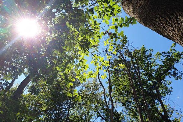 Dans l'Allier, la forêt de Tronçais est touchée par le réchauffement climatique.