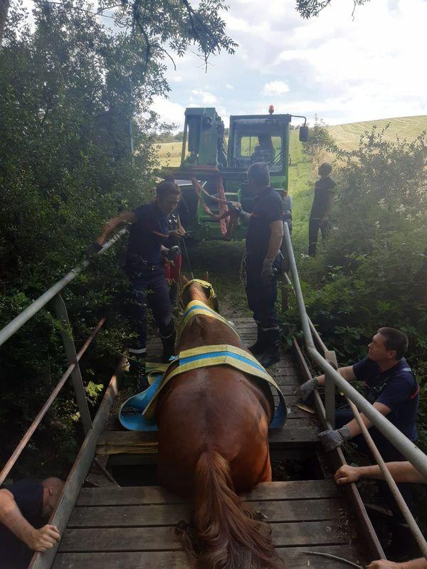 Le cheval s'est retrouvé coincé par le train-arrière au milieu du pont en bois