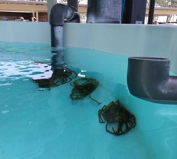 2300 mètres carrés, 115 bassins, et 37 aquariums. Le laboratoire Stella Mare est labellisé par le CNRS depuis 2011.