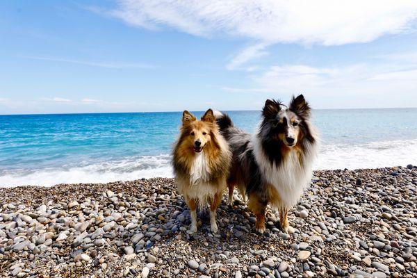 La plage en face de l'hôpital Lenval de Nice est désormais accessible aux chiens.