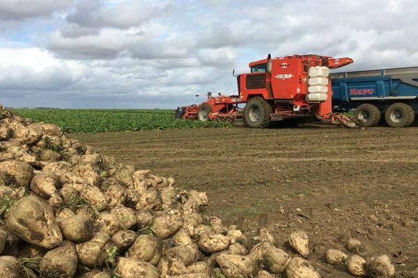 Une récolte de betteraves à Chaussy (Loiret), fin septembre 2019.