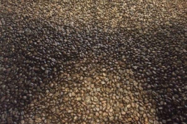 Des grains de café torréfiés par Café Michel, à Pessac.