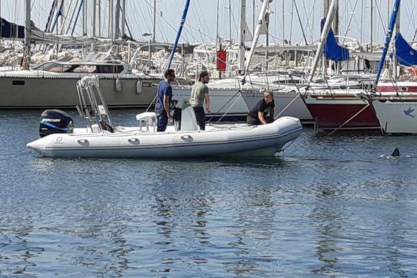 Pendant plusieurs jours en avril 2019, la présence d'un requin bleu femelle suscite la curiosité dans le port de l'Estaque à Marseille.