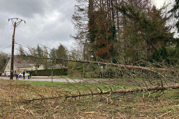 La tempête Bella a provoqué des chutes d'arbres en Haute-Saône, comme à Pin.