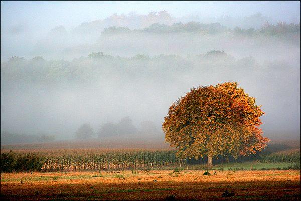 """""""Réveil brumeux 4. - Foggy awakening."""" by capitphil"""