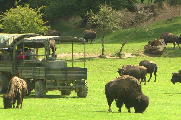 """16 juin 2021 : une des premières visites de groupe au parc animalier """"Rêve de bisons"""" à Muchedent près de Dieppe"""
