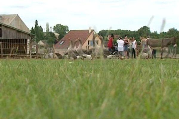 Âne, oie ou encore biche, les visiteurs peuvent passer du temps avec les animaux de la ferme.