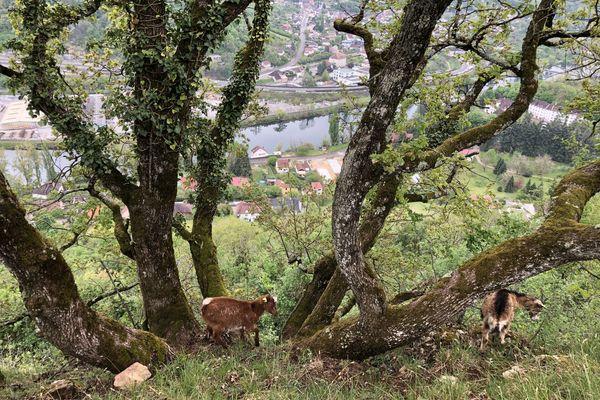Les chèvres à l'aise à la cime du pierrier