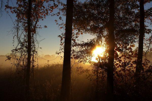 Un lever de soleil dans les arbres.