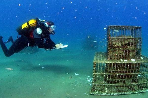 Le projet Sublimo suivi par le Centre de recherches sur les écosystèmes marins - CREM