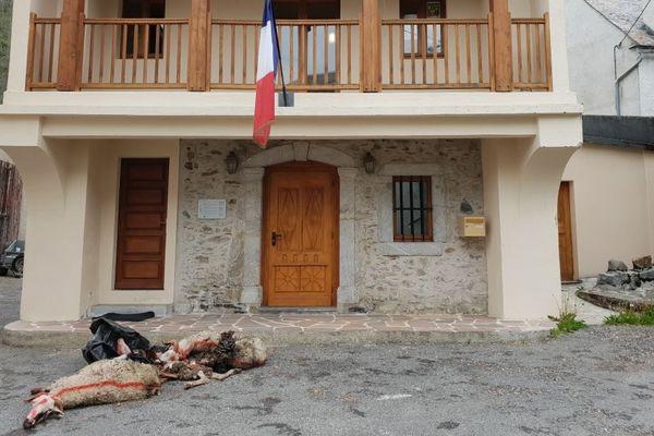 Des cadavres de brebis déposées devant la mairie de Bareilles (65)