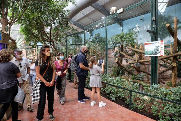 Pour entrer au ZooParc de Beauval (Loir-et-Cher), à partir du 21 juillet, il faut montrer patte blanche.