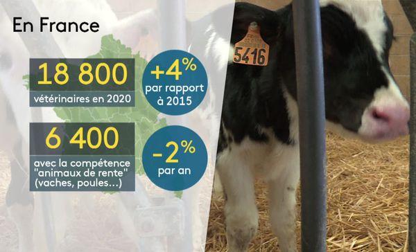 """Nombre de vétérinaire en France en 2020 et ceux qui ont la compétence """"animaux de rente"""""""