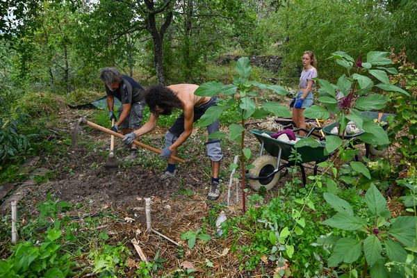"""Des apprentis travaillent la terre dans le potager """"Le Mas de Beaulieu"""" le 20 août 2020 à Lablachère, en Ardèche."""