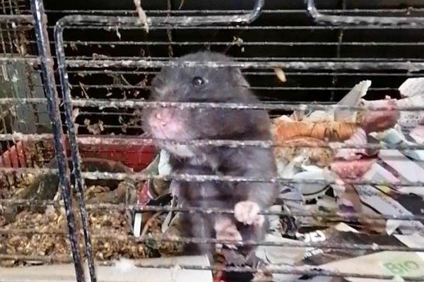 """Un hamster livré à lui même dans la maison de """"l'horreur"""" de Culan (Cher)"""