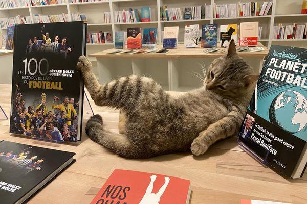 La lecture donne sommeil