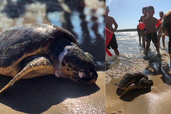 Cette tortue s'est échouée sur la plage de sainte-croix à Martigues sous le regard de quelques curieux