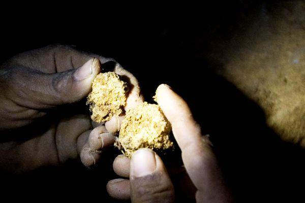 Chercheur d'or en Indonésie