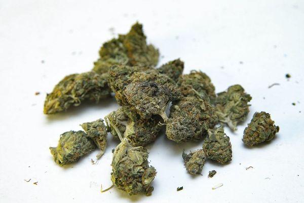 Du cannabis sans THC, contenant uniquement du CBD (illustration).