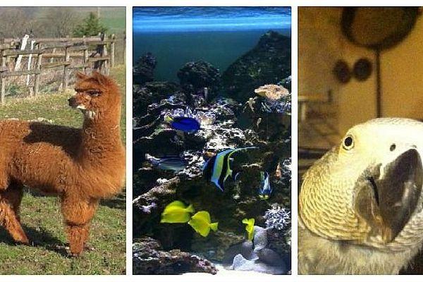 Lamas, poissons, perroquets... De nombreux animaux exotiques vivent en Bourgogne