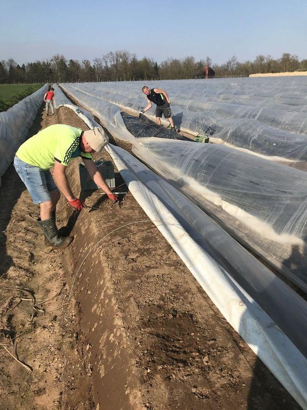 Dans l'exploitation de Jean-Charles Jost, quatre personnes travaillent actuellement. Ces dernières années, une soixantaine de saisonniers était nécessaire pour assurer la récolte.