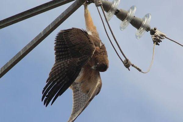 """""""700 oiseaux meurent chaque année dans le Var"""", explique le directeur de la LPO PACA."""