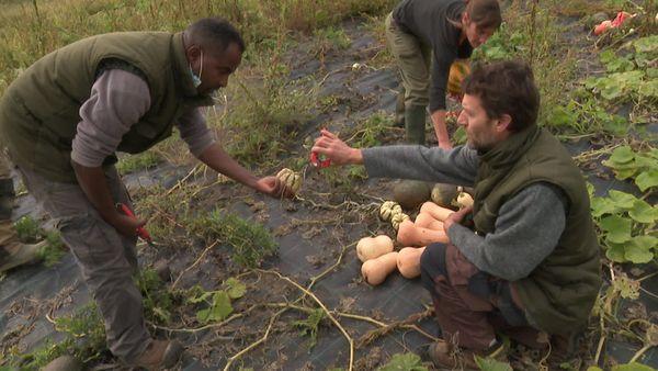 """récolte du jour au potager, sous les conseils avisés de Cyril,  co-directeur de """"Tero Loko"""""""