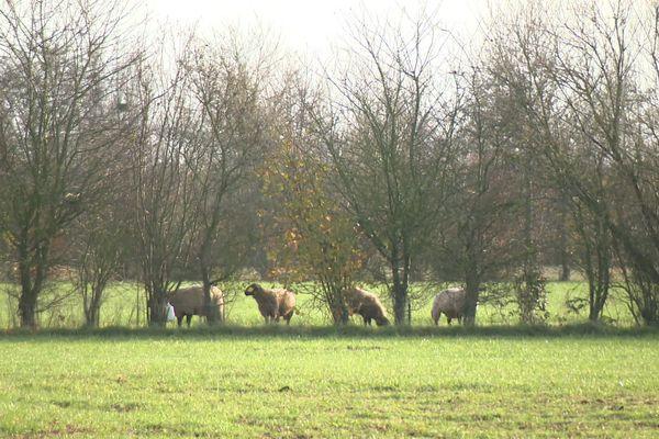 Les champs de Sylvain Deraeve, agriculteur à Bayonvillers dans la Somme, sont entourés d'arbres et de haies.