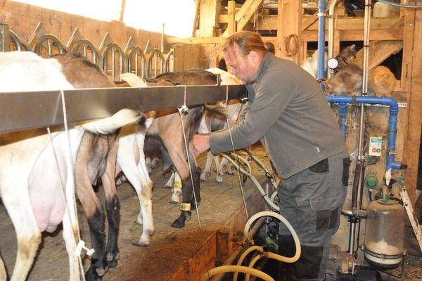 Dennis Grote, ancien cadre dans l'hôtellerie de luxe à Paris, dans sa chèvrerie à Lugarde (Cantal)