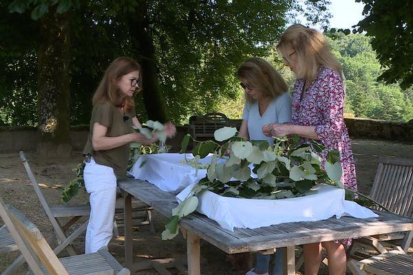 Les trois sœurs Polette procèdent à la cueillette et au tri du tilleul qui rentrera dans la composition de leurs produits cosmétiques commercialisés à partir de septembre