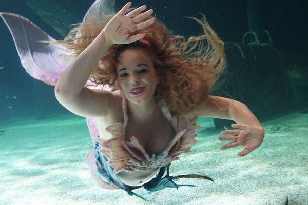 Andrina dans un bassin de l'Ocearium