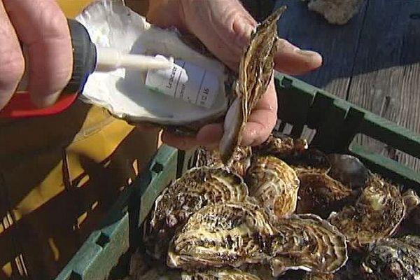 Leucate (Aude) - des huîtres fantôme comme antivol dans le parc ostréicole - décembre 2016.