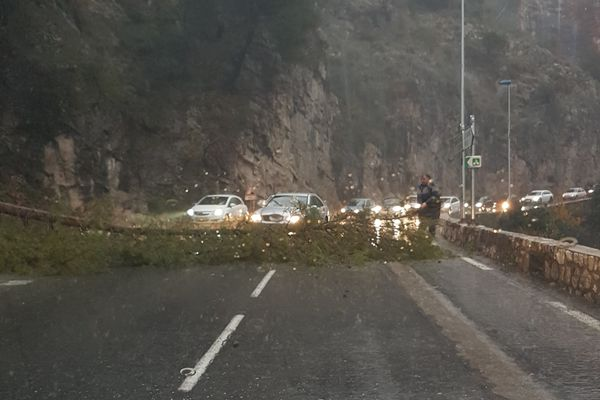 Un arbre tombé sur la route de Levens, dans les Alpes-Maritimes.