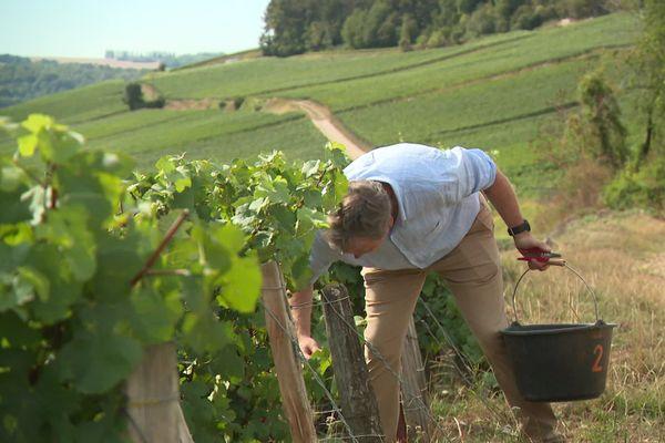 Les producteurs de champagne ont mis en place un protocole sanitaire pour les vendanges.