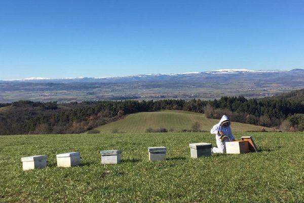 Julien Vignancourt vérifie ses ruches sur la commune de Sainte-Hilaire (Haute-Loire) suite à l'épisode de froid connu en Auvergne début avril.