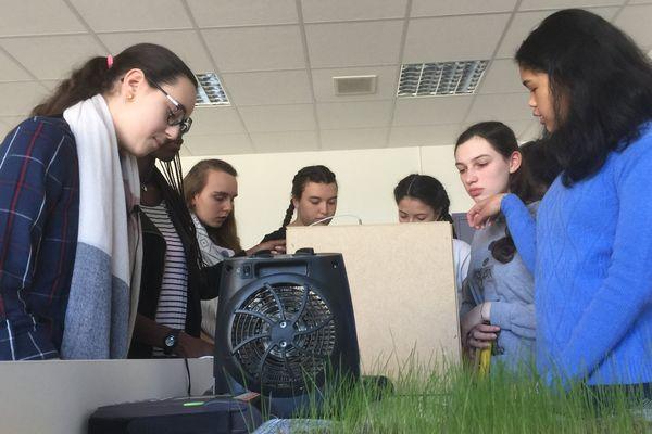 Des maquettes et du gazon pour étudier l'apport du végétal dans la construction