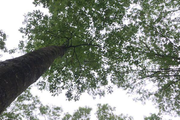 La forêt Normande et Française se meurt, quelles solutions pour l'avenir ?