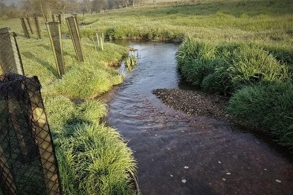rétablir de cours naturel des ruisseaux bordés d'arbres