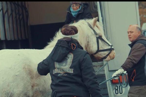 35 chevaux ont été secourus par le zoo-refuge de la Tanière début décembre