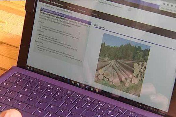 Grâce à la Box Bois, un site internet, la filière bois du Massif Central veut se structurer et devenir plus collaborative.