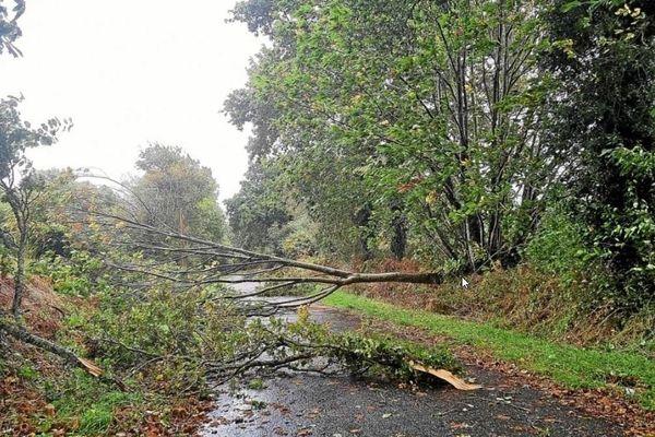 Dans le département de l'Yonne, de nombreux arbres se sont retrouvés cassés ou déracinés par la tempête. Ici sur la commune de Chaumot (Yonne)
