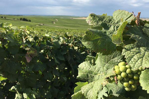 En Champagne, on vise l'export. En Alsace, l'effort est porté sur l'oenotourisme, notamment.
