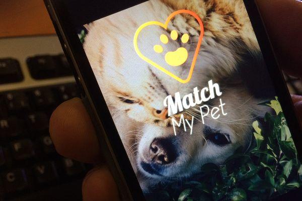 Pets Dating : les rencontres entre animaux de compagnie évoluent !