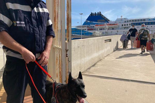 Inslag, la chienne anti-covid des marins-pompiers est mise à contribution dans la traque du virus auprès des passagers qui débarquent sur le port de Marseille.
